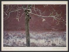 Michel Delaborde, Beijing (Pékin), (arbre à l'automne) 1982. © Ministère de la culture (France), Médiathèque de l'architecture et du patrimoine, Diffusion RMN-GP