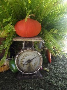 pumpkin on scales