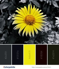 Color Palette Ideas from Flower Yellow Flora Image Colorful Flowers, Wild Flowers, Yellow Black, Blue, Pallet Painting, Find Color, Colour Combinations, Colour Inspiration, Flower Images