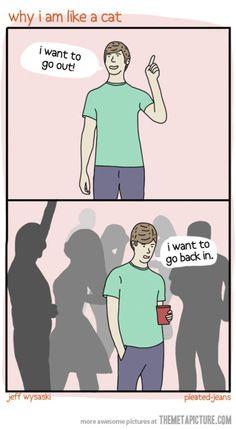 Why I am like a cat…