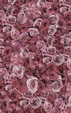 ** Dusty Rose Pink Roses