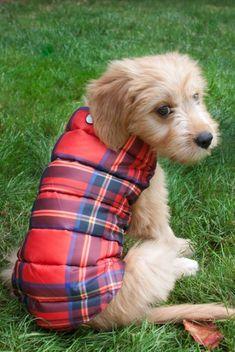 tartan puffer doggie vest- ha!!!!!