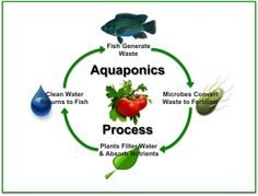 How-Does-Aquaponics-Work?