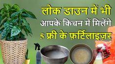 Organic Liquid Fertilizer, Bean Seeds, Tomato Seeds, Growing Flowers, Bonsai, Garden Tools, Watermelon, Vegetables, Food
