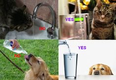 PETS - Your Pets will Love Alkaline Ionized Water! It's MUCH Better for them! You Love your pets, right? They're family, too, so they deserve the Best Water, just like you! #AlkalineWater #IonizedWater #Healthy #Water #HealthBenefit #Antioxidants #Hydration #TapWater #Pets #Family