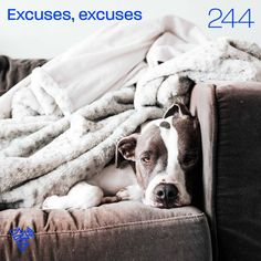 Excuses, excuses You can listen to this talk at podcastrevival.com/244 or find us in your podcast app on your phone. #Jesus #Christ #God #holyspirit #baptism #bible #PodcastRevival #RevivalFellowship Joy Of The Lord, Holy Spirit, Jesus Christ, Boston Terrier, Bible, App, Phone, Pastor, Holy Ghost