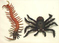 centípedes - Pesquisa Google