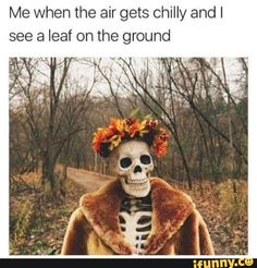 A Big Batch of Pics and Memes for the Exquisite Minds Pics) Halloween Meme, Cool Halloween Costumes, Couple Halloween, Fall Halloween, Halloween Party, Halloween Makeup, Halloween Countdown, Fall Memes, Fall Humor