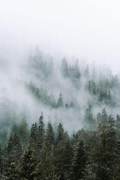morgan-phillips: Foggy Trees - Morgan Phillips