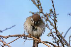 Animal Kingdom, Wordpress, Birds, Contemporary, Blog, Animals, Macros, My Hair, Animales
