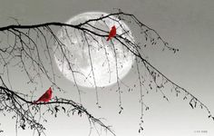 Cardinal Moonlight for Mom Cardinal Tattoos, Bird Wall Art, Cardinal Birds, Bird Pictures, Artist Art, Bird Feathers, Beautiful Birds, Painted Rocks, Watercolor Paintings