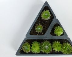 Concrete Succulent Planter Set Triangular di ConcreteProject