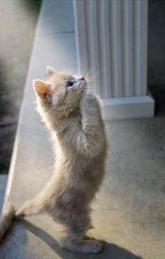 ✭ adorable kitty