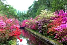 Keukenhof Gardens Bloom