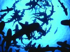 Amazon.com: Shark Week: The Great Bites Collection: Shark Week ...