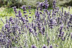Photo Shoots, Dandelion, Artist, Flowers, Plants, Artists, Floral, Plant, Taraxacum Officinale