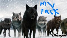 my wolf pack