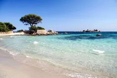 Idyllic Palombaggia Beach in Porto Vecchio, Corsica Best Vacation Destinations, Best Vacations, Amazing Destinations, Best Beaches In Europe, Beaches In The World, Visit France, South Of France, Corsica, Most Beautiful Beaches