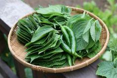 깻잎쌈 샐러드 한쌈씩 들고 먹어요.텃밭요리 : 네이버 블로그 Spinach, Menu, Vegetables, Cooking, Food, Kitchens, Menu Board Design, Kitchen, Essen