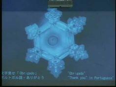 Mensagem da água (LINDO): palestra de Masaru Emoto - (Nova Consciência) - YouTube