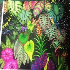Midnight in the magical jungle - page 1 #johannabasford #johannabasford_repost #magicaljungle #johannabasfordmagicaljungle #junglamagica #adultcolouring #adultcoloring #bayan_boyan #colorindolivrostop #fang_colourful_world #color_repost #majesticcoloring #midnight #favercastell #polychromos #pittpens #prismacolor #premier