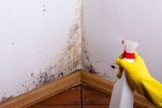 Mildew can accumulate in damp areas and this can cause problems like stains and unpleasant odors. Use these 7 tricks to naturally eliminate mildew. Mold Spray, Wet Basement, Types Of Mold, Get Rid Of Mold, Natural Cleaning Products, Mold And Mildew, Home Hacks, Clean House, Housekeeping