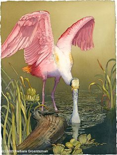 Lunch in the Everglades by Barbara Groenteman Watercolor ~ 30 x 24