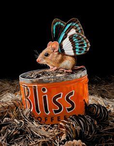 ALLPE Medio Ambiente Blog Medioambiente.org : Cómo pintar ratones que vuelan como mariposas