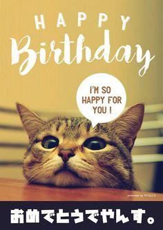 猫好きが萌えるお誕生日おバカ画像 Happy Birthday Animals, Happy Birthday Wishes Cards, Happy Birthday Funny, Cat Birthday, Birthday Messages, Birthday Greetings, It's Your Birthday, Animals And Pets, Funny Animals
