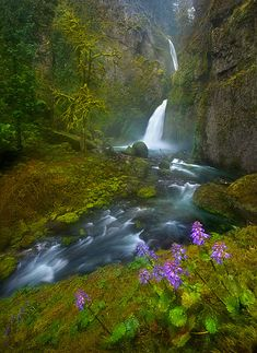Columbia River gorge waterfall, Oregon by Marc Adamus