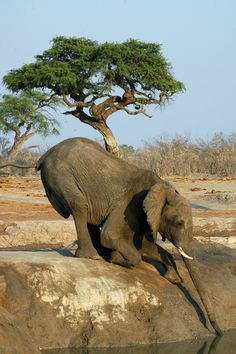 Elephant at the watering hole.