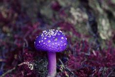 ✿ Purple Mushroom ✿