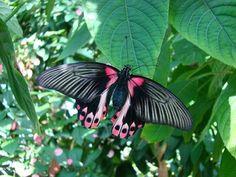beautiful exotic butterfly pics   Butterflies in the Garden @ Fort Worth Botanic Garden   www ...