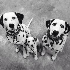Lovely Dal Family!!  Photo by Jenny Pogue (taken from Facebook)