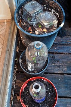 Vertical Gardener: DIY: Garden Cloches Using Recycled Materials