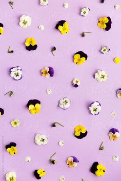 Stocksy United – Royalty-Free Stock Photos – Pansy background by Ruth Black