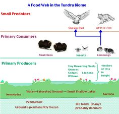 The Ecological Significance of Animals