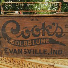 Cook's Goldblume