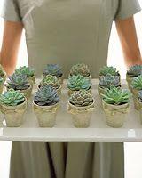 de Lovely Affair: Mini Succulents: Perfect eco-friendly wedding favors, gifts, centerpieces