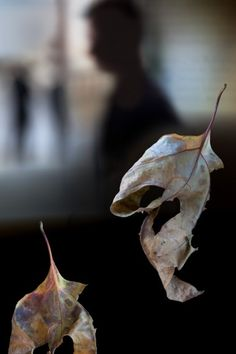"""Two Leaves ~ 2012 ~ 22"""" x 33"""""""