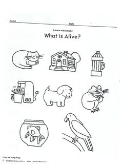 Living vs Non-living activity! I used this as an extension activity with the book Alexander and the Wind Up Mouse by Leo Lionni