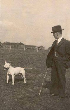 Bull Terrier ''Buddy of Broom'' and Carleton Hinks, 1920s – 1930s
