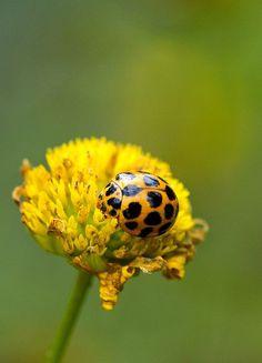 bellasecretgarden: All alone by aussiegall on Flickr