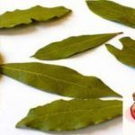 Dites adieu aux douleurs articulaires, aux migraines, aux varices, à l'acné, aux boutons et plus encore, grâce à ce remède à base de plantes!
