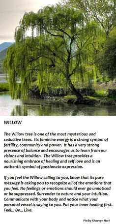 Weeping Willow Tree Illustration Ideas For 2019 Willow Tree Tattoos, Weeping Willow Tattoo, Tree Quotes, Celtic Tree, Tree Illustration, Foto Art, Tree Of Life, Magick, Herbalism