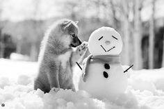 ♥ Pet Photography / Winter Photo Session Ideas / Puppy / Snowman