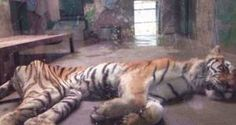 Easy Share | Improve animal welfare at Tianjin Zoo, China! | Yousign.org