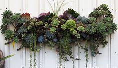 Beautiful succulent design  _MG_4676.b