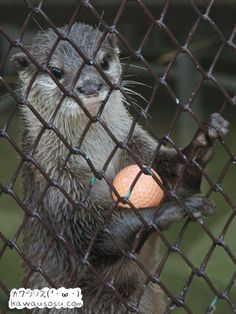 otters like toys