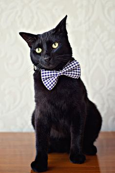 FYI, black cats look the best in bowties.    Just so you know.